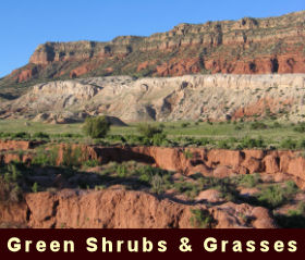 photo of green shrubs and grasses