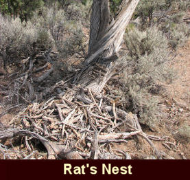 photo of dead wood that rats pile up and live within