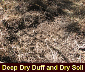 Photo of deep, dry duff and dry soil.