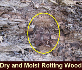 Photo of dry and moist rotting wood