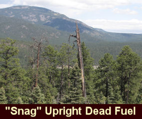 "photo of what is called ""snag"" - upright dead fuel"