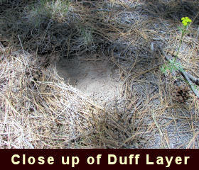 Close up photo of a duff layer