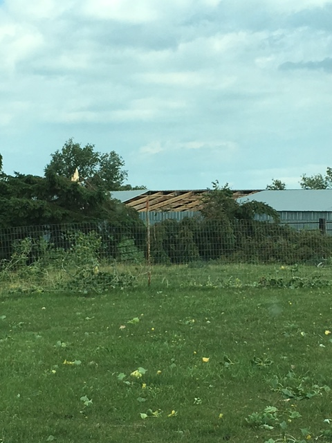 Roof damage to a house near Hillshead (Photo from Marshall County EM)
