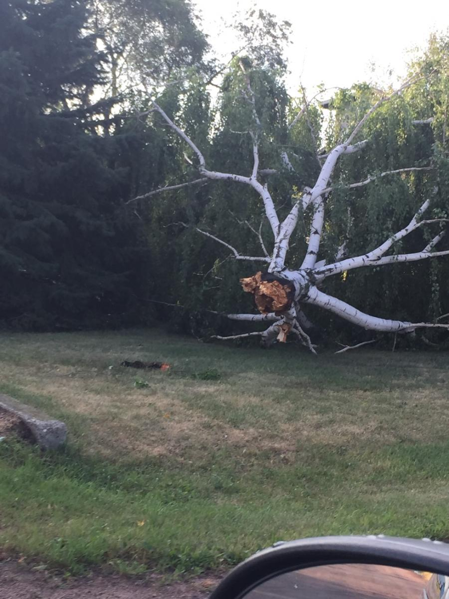 Tree damage around Ipswich (Photo from Edmunds County EM)