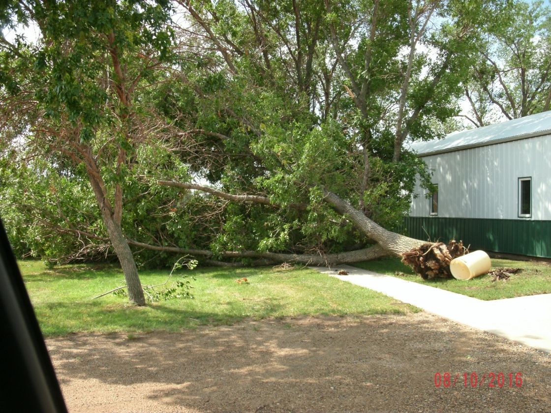 Tree uprooted near the 4H building (Photo from Edmunds County EM)