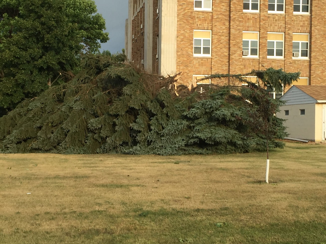 Tree snapped at County Courthouse (Photo from Edmunds County EM)