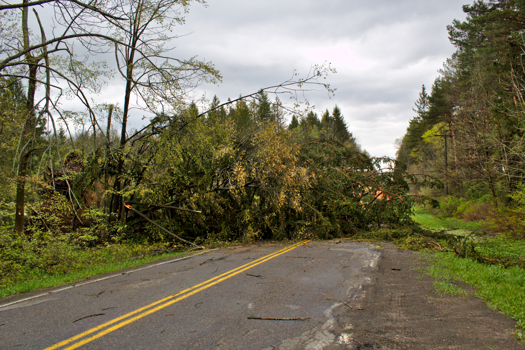 Tree on road Chenango County