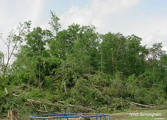 Tree damage in Walker County