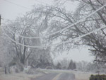 ice in trees and powerlines in randolph county