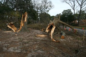 Tree damage from the Savannah microburst.
