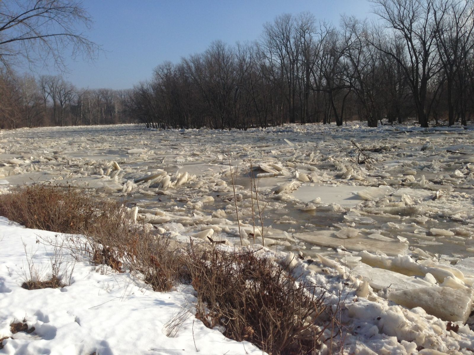 ice shield across the Maumee River at Sidecut Park 1/14/14