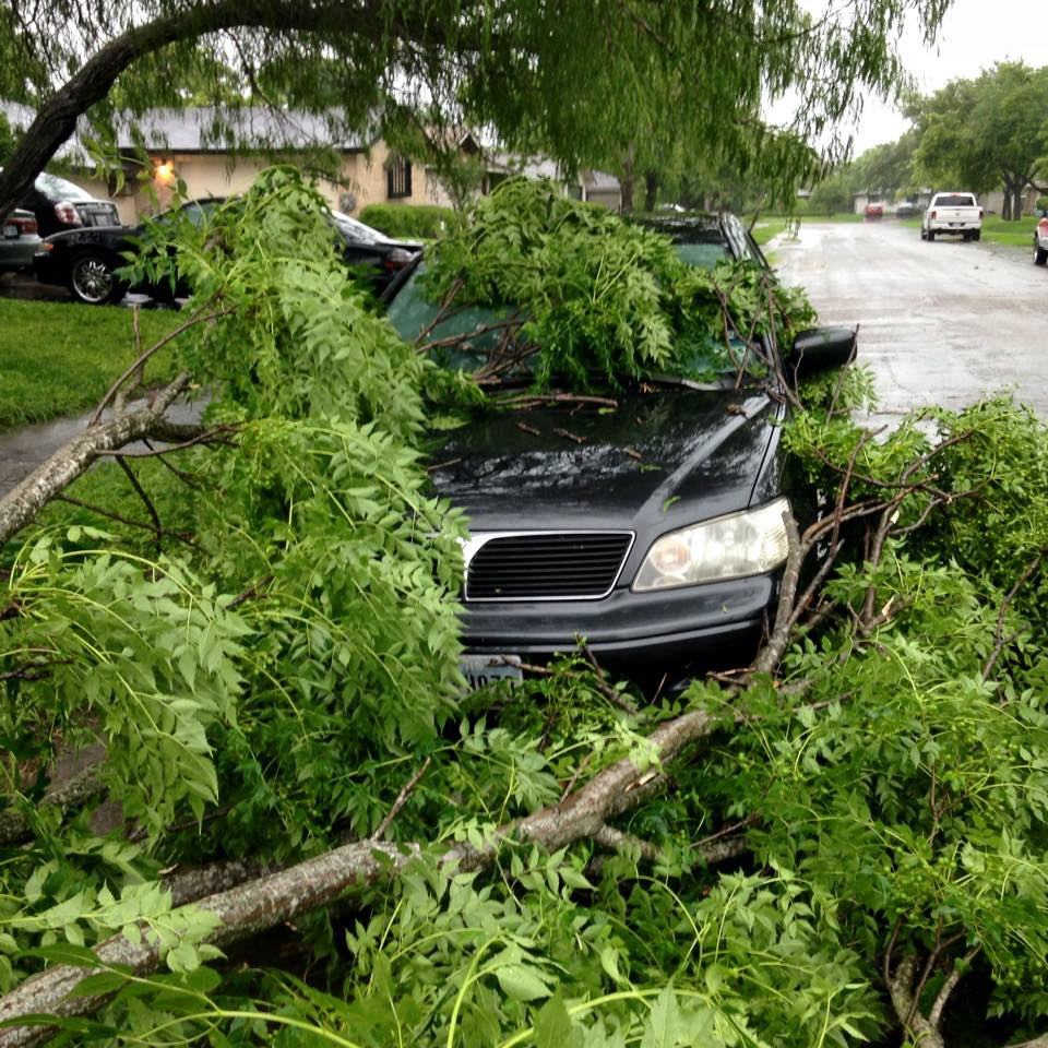Tree Limb Down on Car