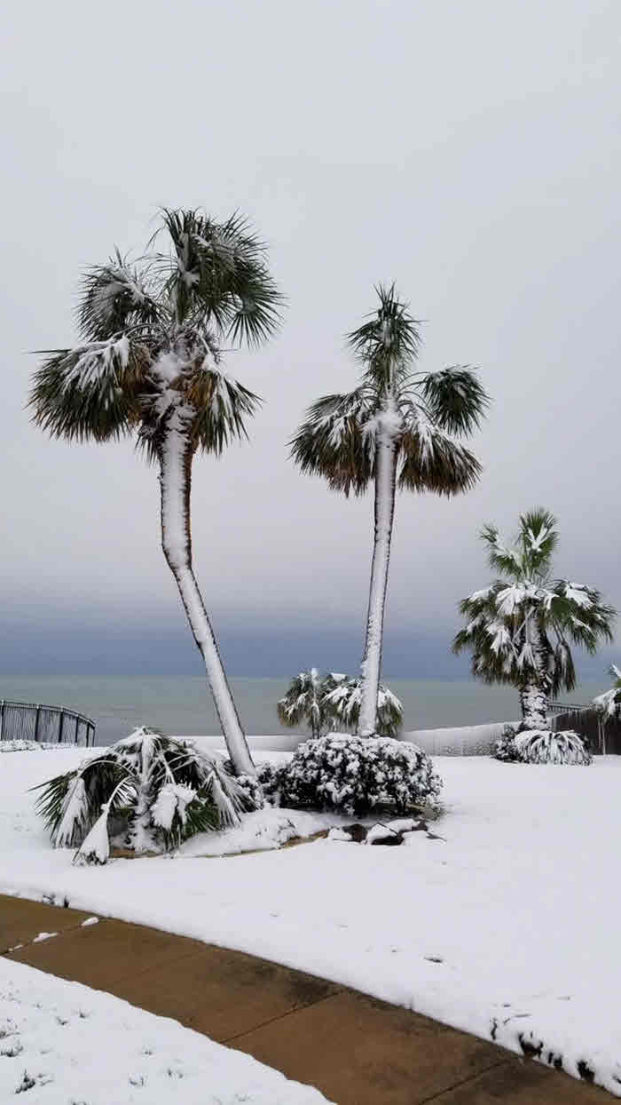 Portland: Palm Trees - Photo Credit: Justin Ives