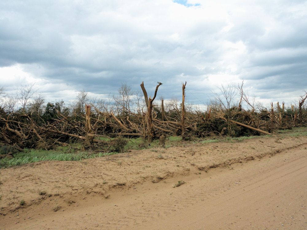 Tree damage in Edwards county