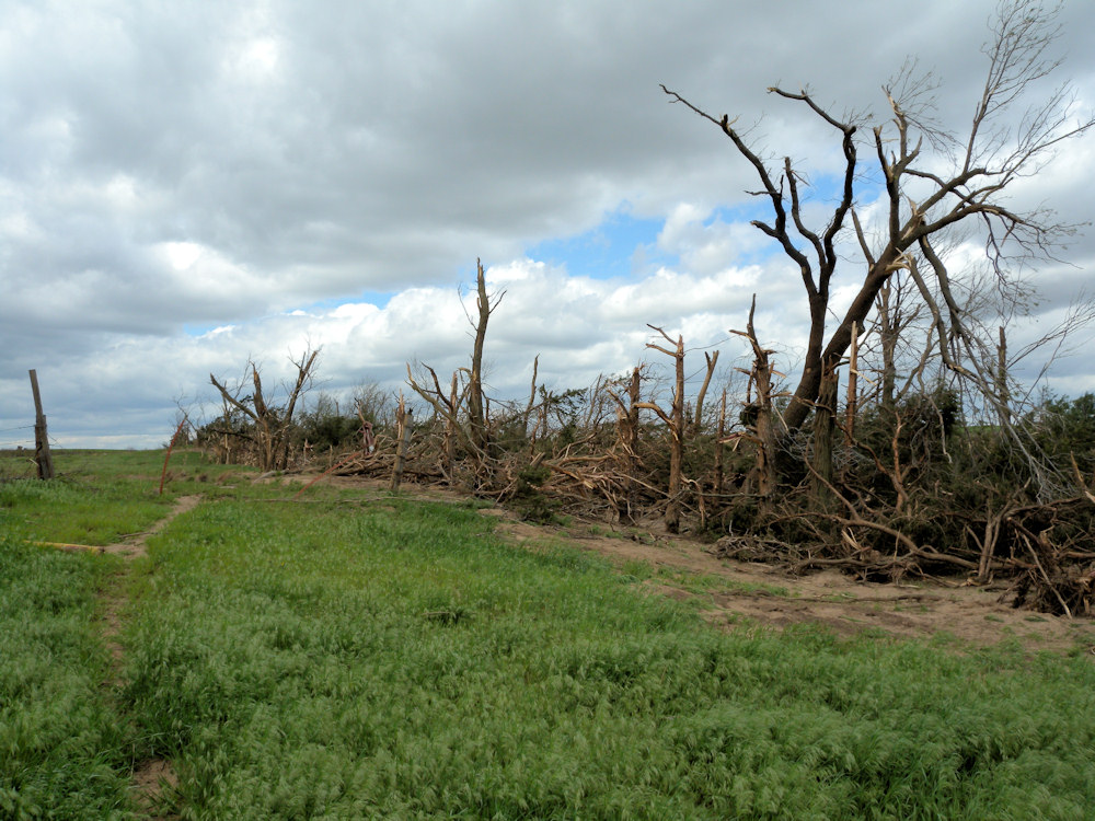 Tree damage in Kiowa county