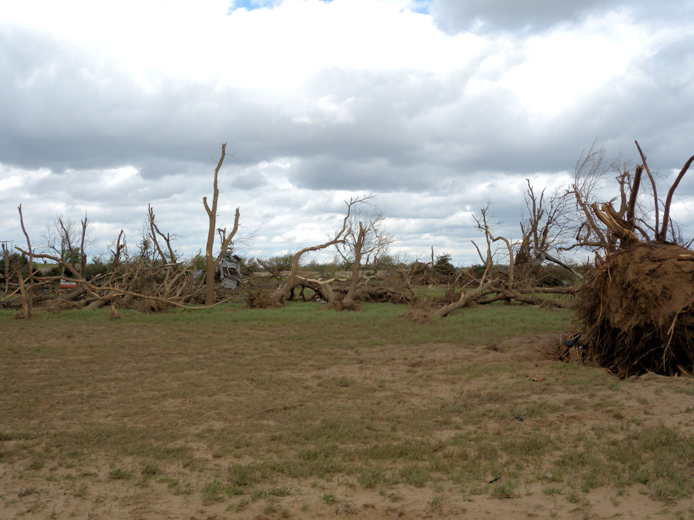 Tree damage in Stafford county