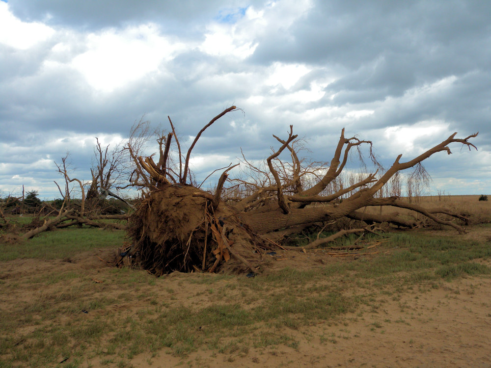 Large tree uprooted in Stafford county