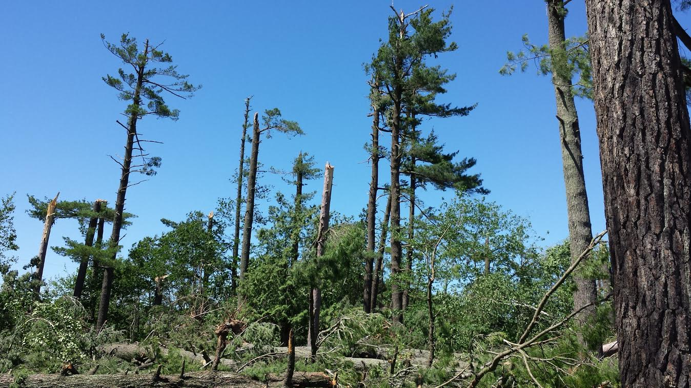 Tree damage near Rutgers along Highway 6