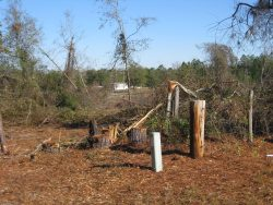 [ Trees Snapped from Wheeler Tornado. ]
