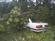 [ tree down on car ]