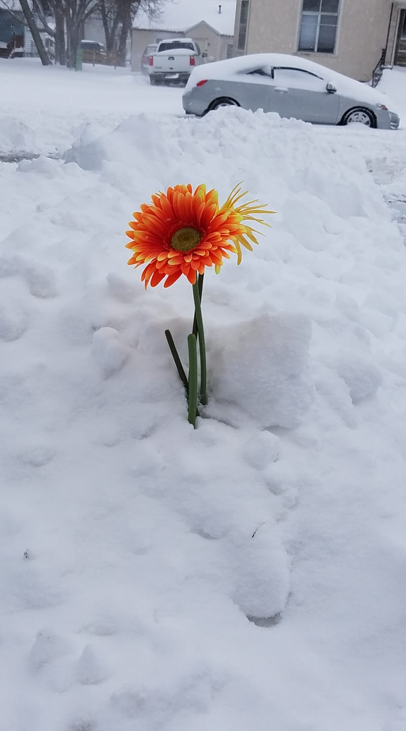 This flower provided a bright spot on an otherwise dreary, and downright treacherous day.
