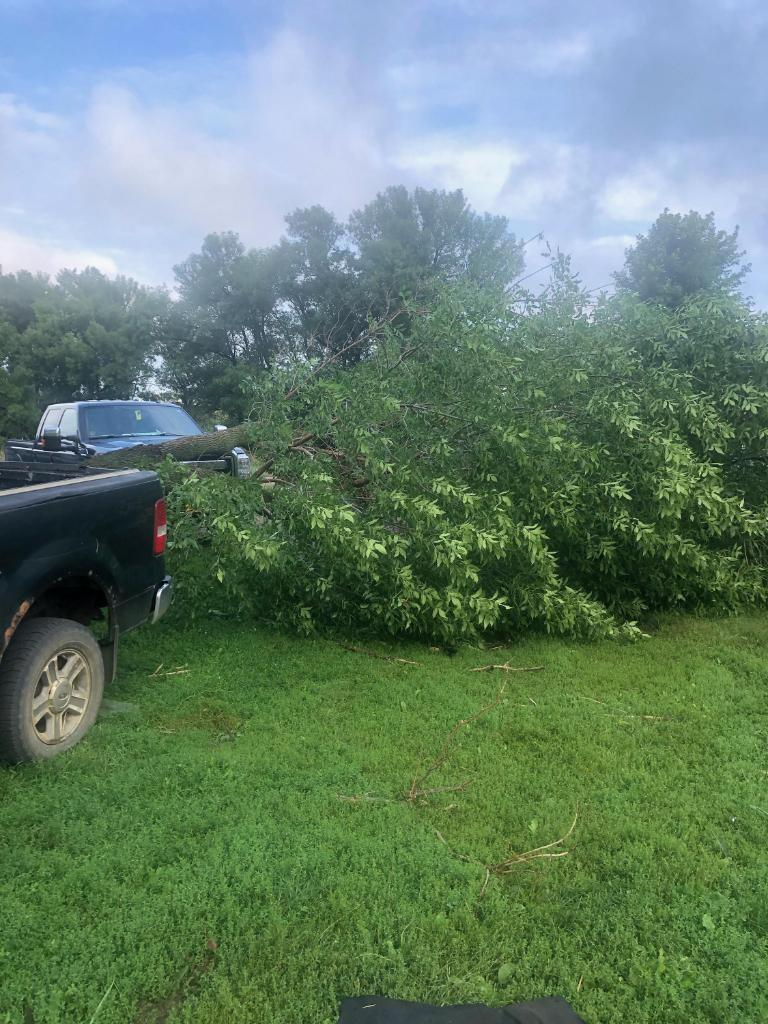 Tree damage near Rock Rapids