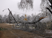 Tree downed by ice across powerlines.