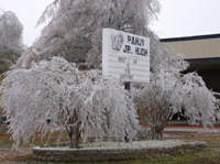 Tree covered in ice in Paris, Tx