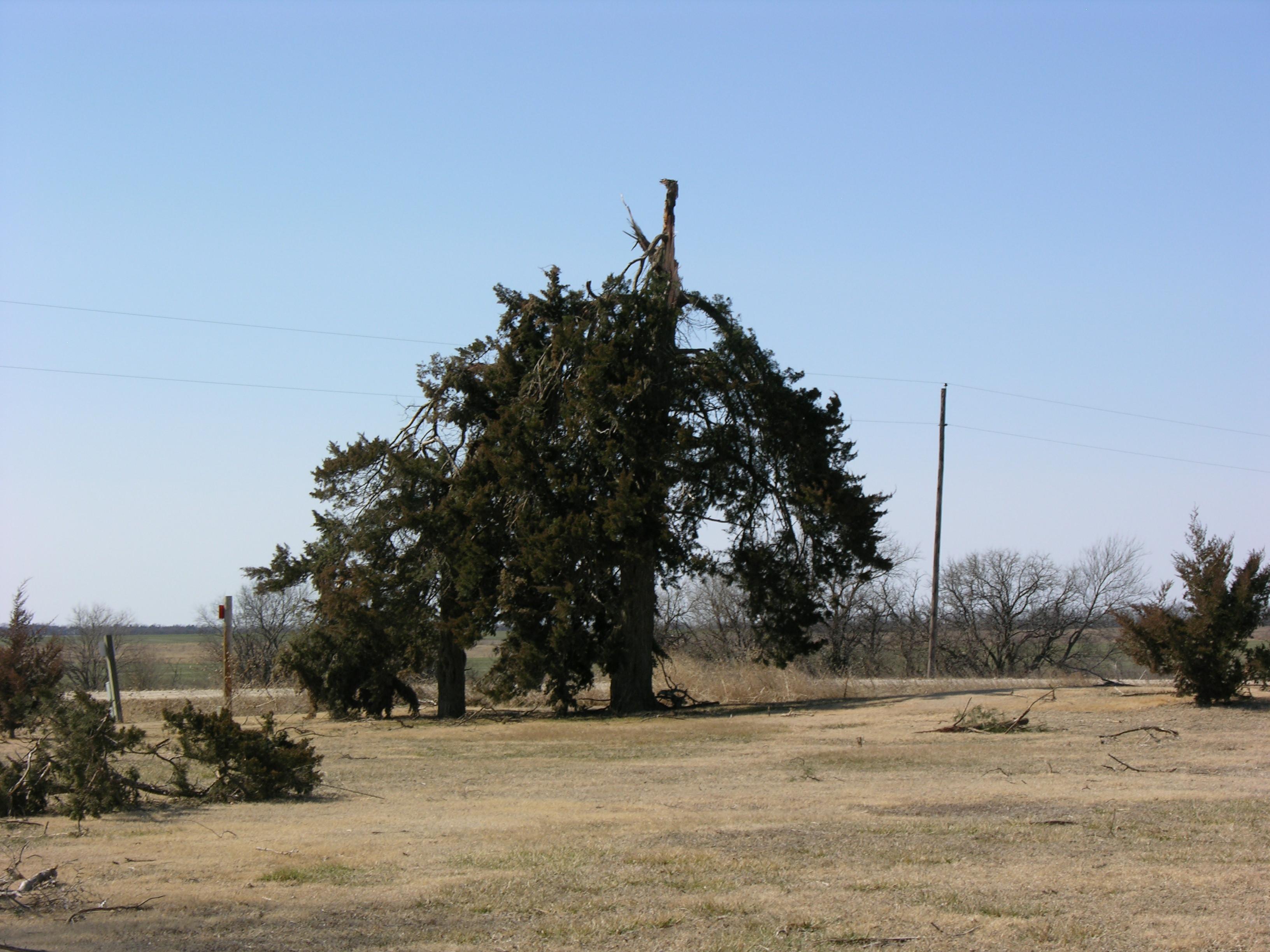 Kansas jewell county randall -  Tree Split From Tornado Near Randall Kansas Jewell County On February 28 2012