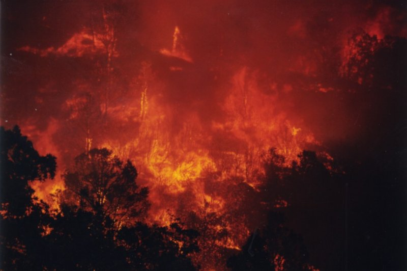 Photo of a raging forest fire