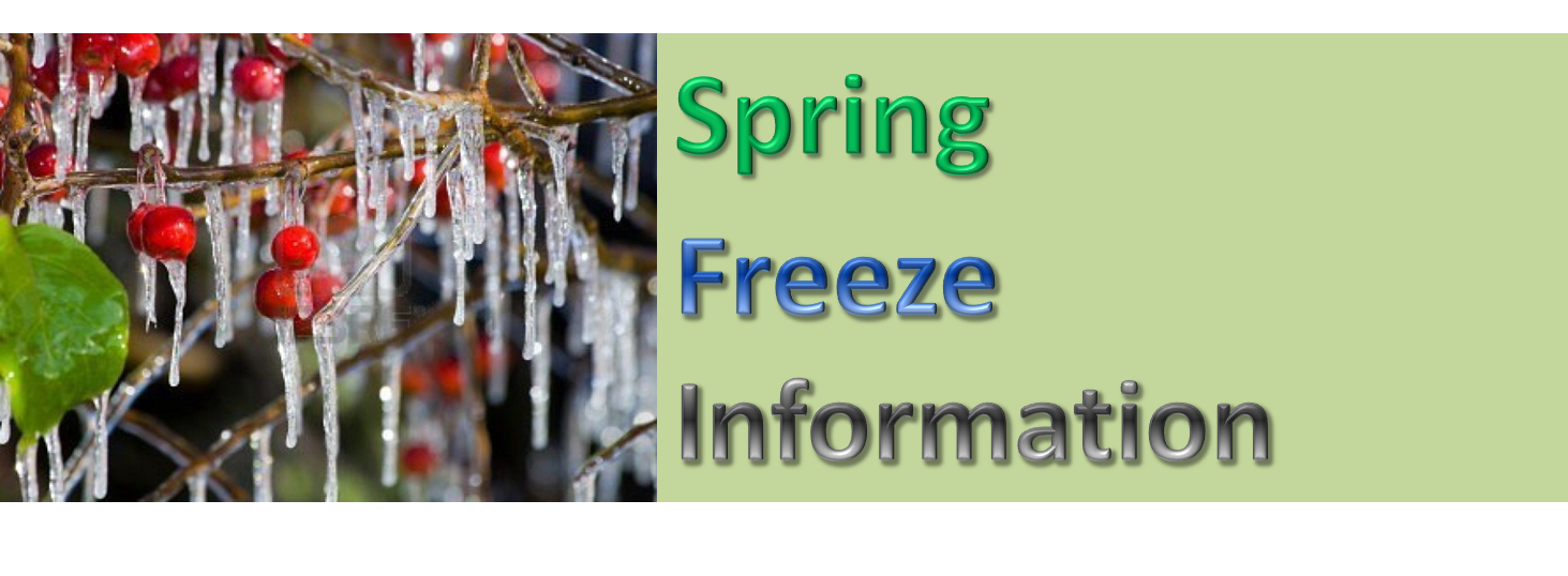 Spring Freeze Information