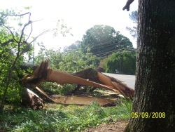 Extensive tree damage occurred across Cullman County with all three of the tornadoes.