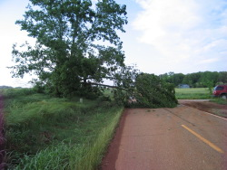 Minor tree damage caused by the tornado                        near Triana.