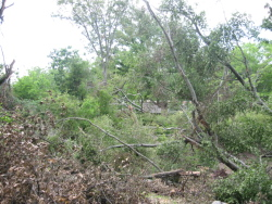 The most extensive tree damage was observed off Macabee Drive, where many trees fell in a convergent pattern.