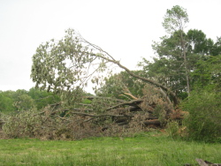The tornado toppled a 4-foot diameter tree off Goose Pond Road and snapped off several medium to large branches.