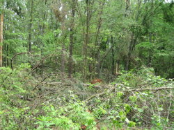 A large area of tree damage on the north end of the Blackwell Swamp.