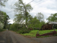 Several trees downed along Roseberry Drive in Scottsboro.