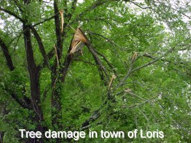 Tree damage in the town of Loris
