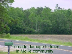 Tornado damage to trees in Mollie Community