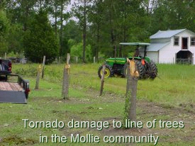 Tornado damage to line of trees in the Mollie Community