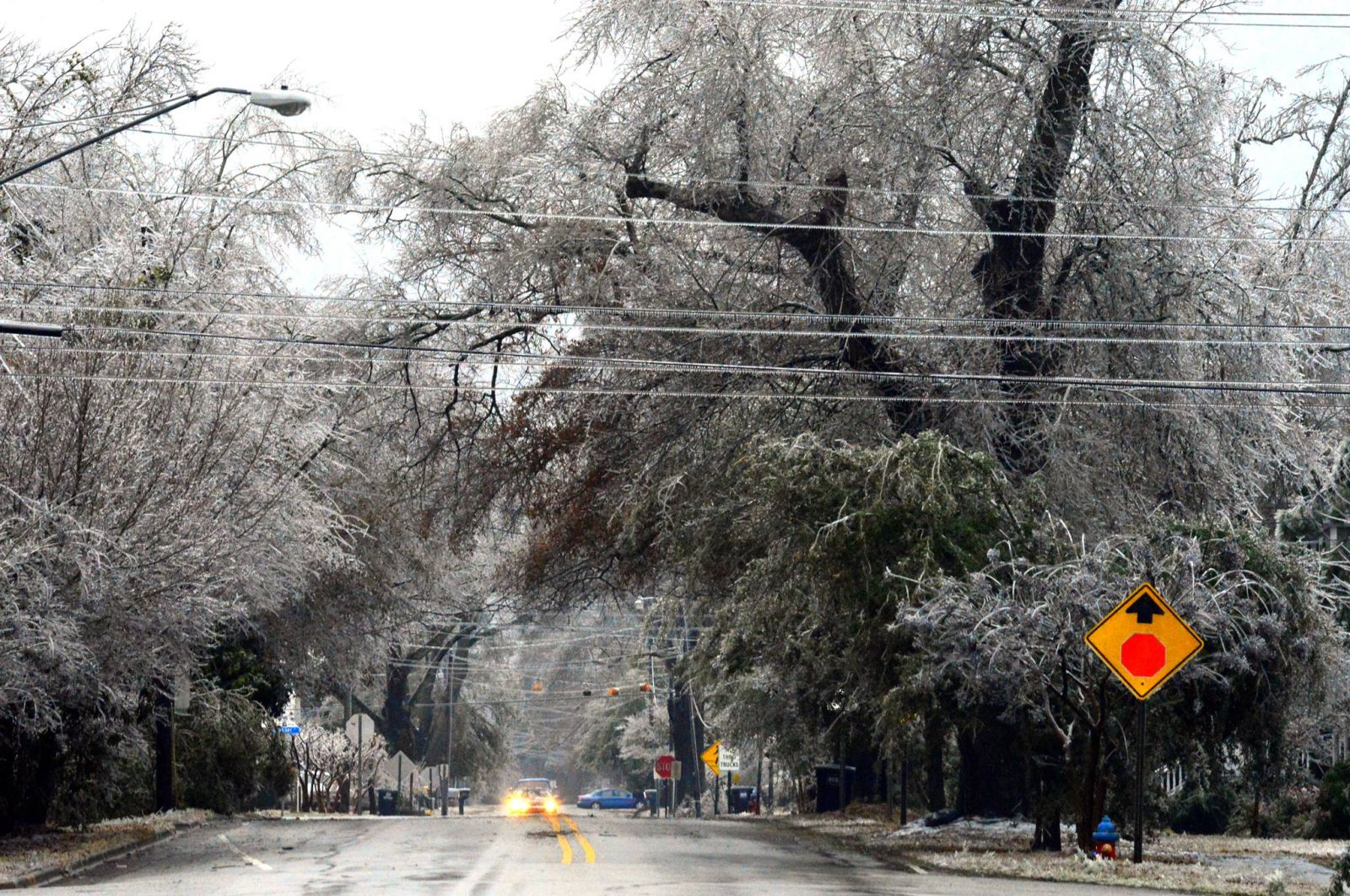 Icy trees in Burgaw.  Photo by Rick Beacham.