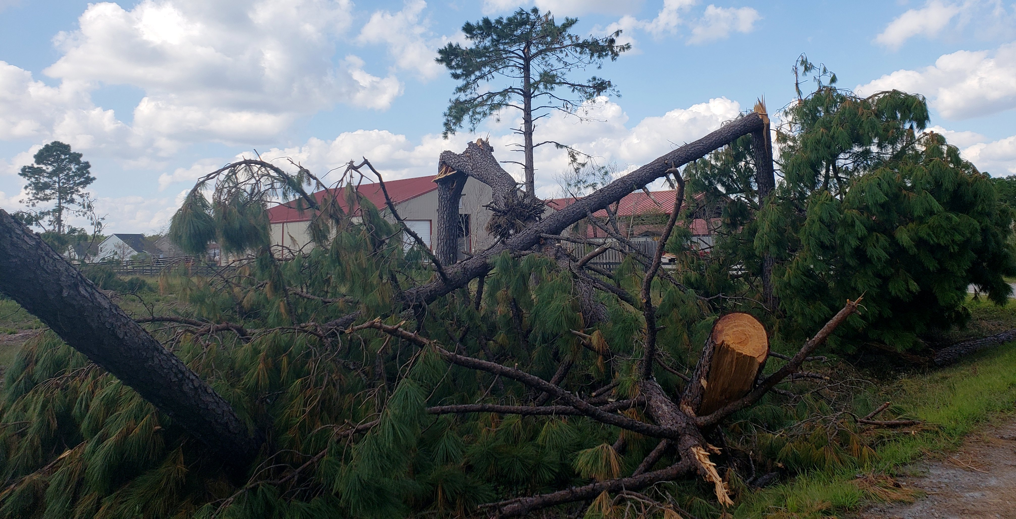 Additional damage to trees from the Bayshore tornado on Sept 15, 2018. (Photo credit: NWS)