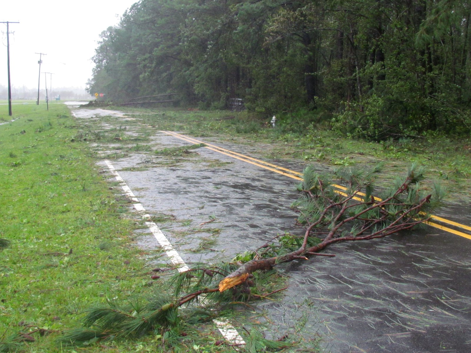 Trees and tree debris covered this road at the Wilmington International Airport after Hurricane Florence. (Photo credit: Tim Armstrong/NWS)