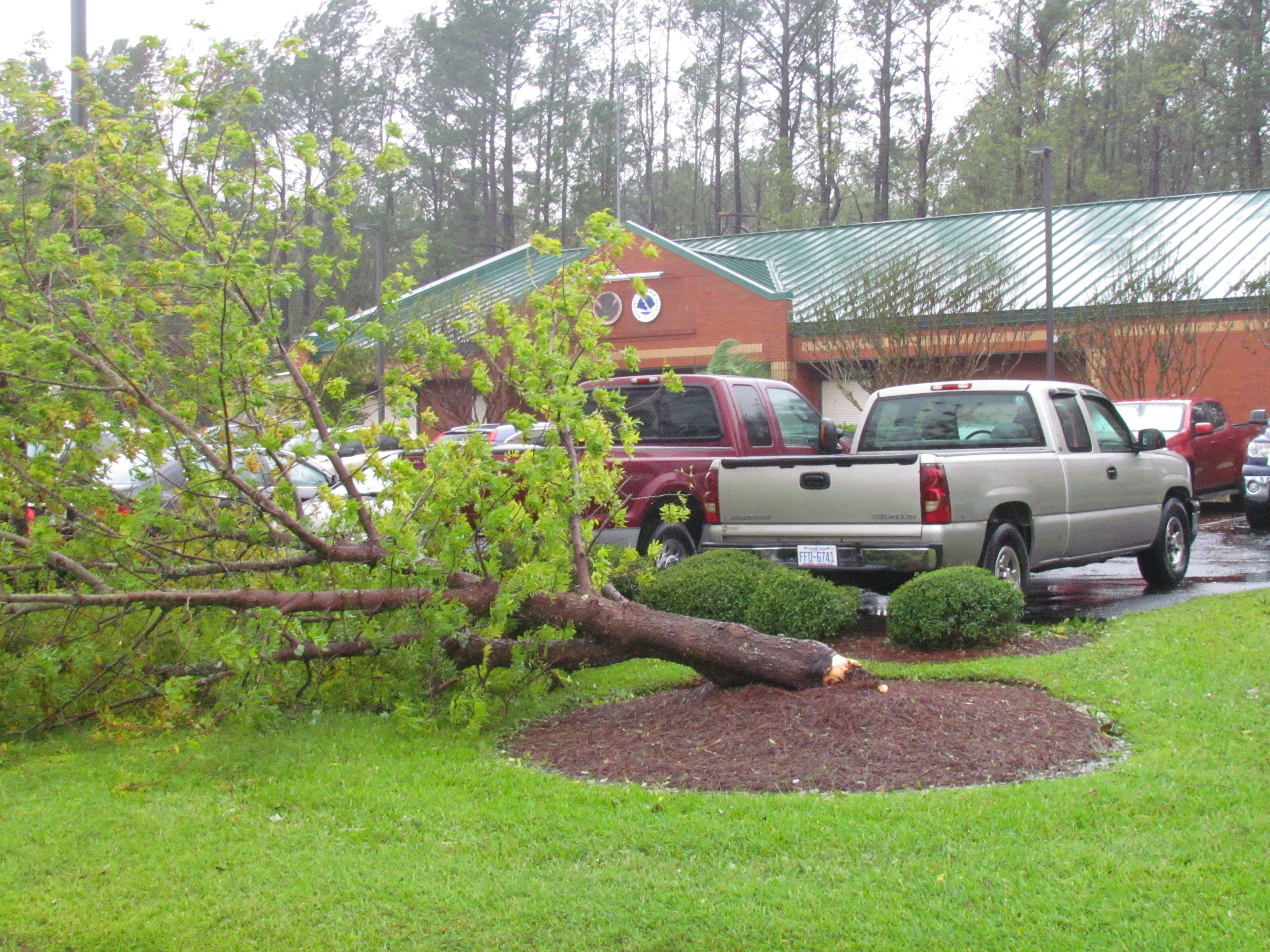 Not even the National Weather Service was safe.  Wind gusts over 100 mph blew down trees in our parking lot, and commercial power was out for many days. (Photo credit: Tim Armstrong/NWS)