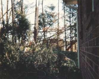 Damage to pine trees from Hurricane Hugo at my parents' home in Catawba County, NC.  This photo was taken within a day or two after the storm.