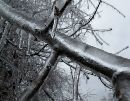 Freezing rain coats branches in the Kings Grant neighborhood of Wilmington a half inch thick.  Photo from Tim Armstrong, NWS Wilmington, during the February 11-12, 2014 ice storm.