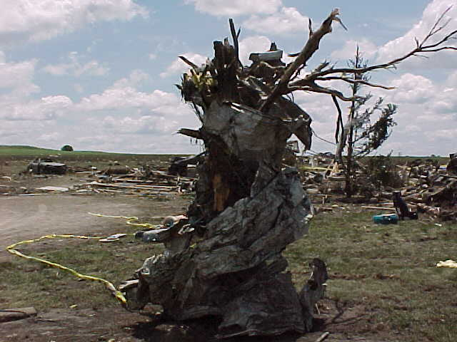 Debris is wrapped around what remains of a tree at one of the destroyed farmsteads.