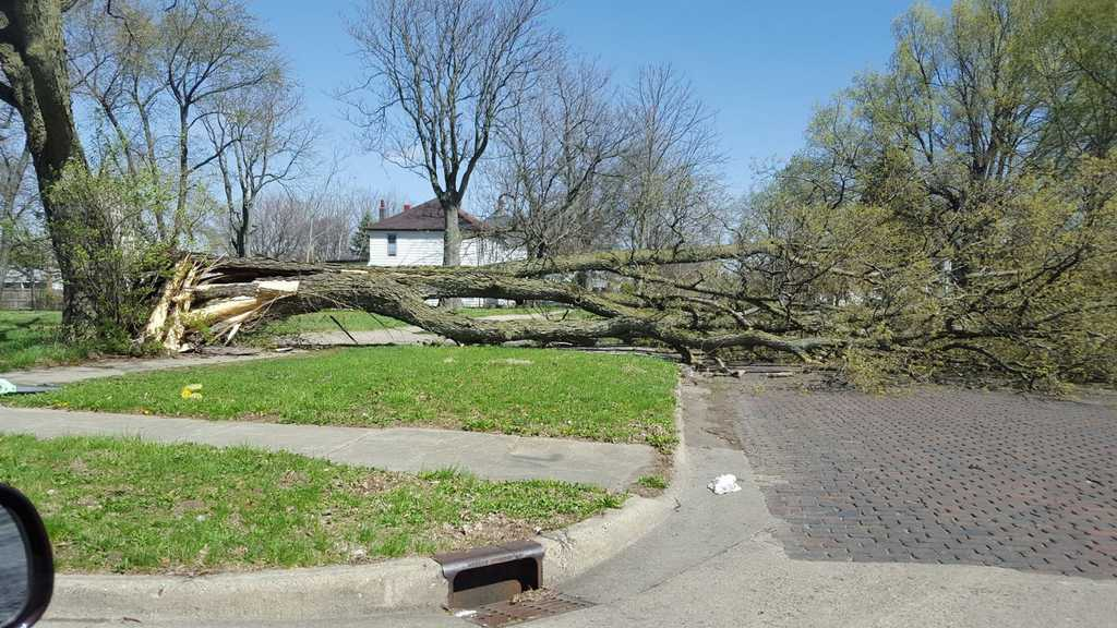 Illinois piatt county cisco - Photo By Kathy Payne Broken Tree In Decatur Photo By Jackie Hayes