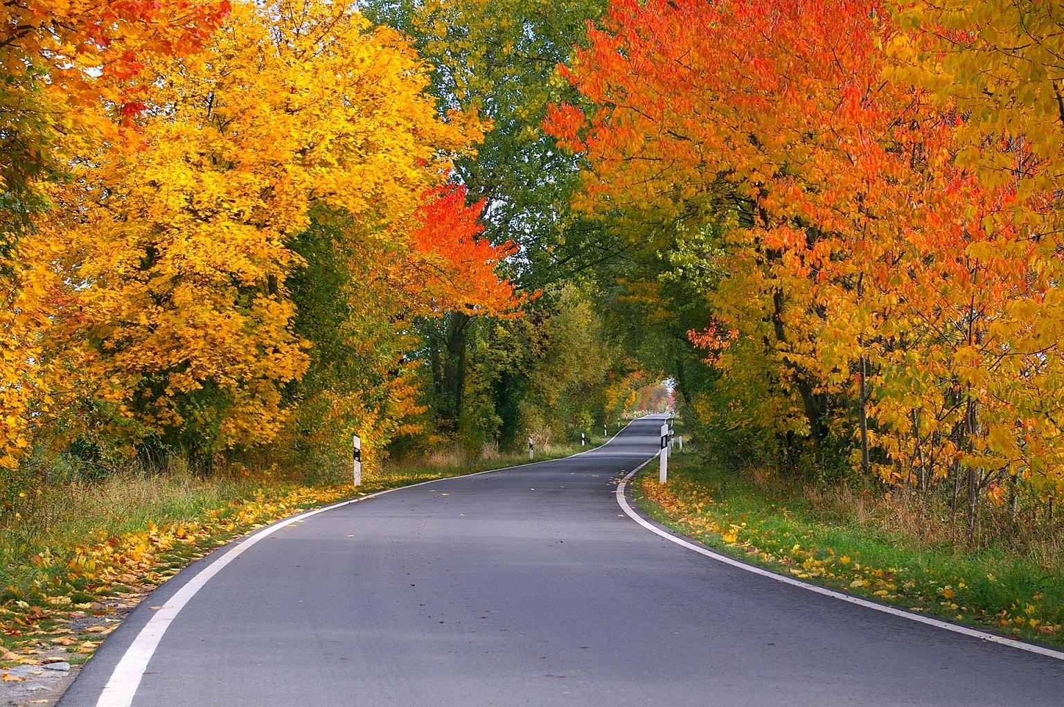 Fall Colors Report