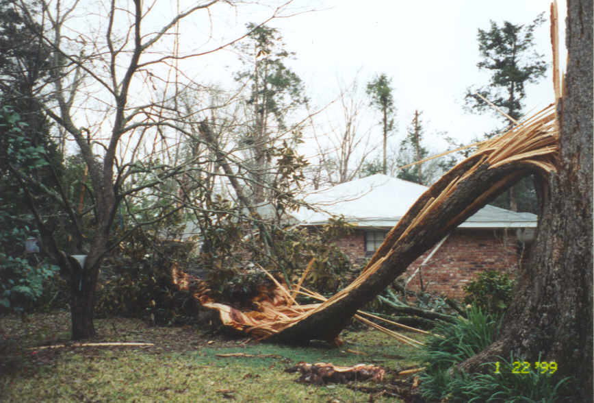 Large fallen tree on home